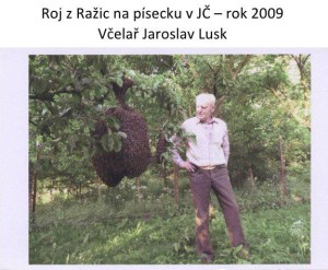 roj-z-razic