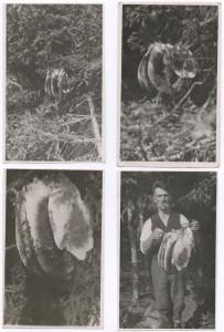 rojzVlastce20-9-1942